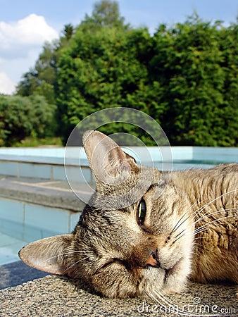 Slumbering cat