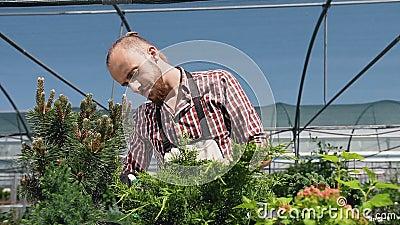 Slut upp av den unga grabben med sprejaren som bevattnar växter i växthus Omsorg av växter, hälsa, ekologi Den unga trädgårdsmäst lager videofilmer