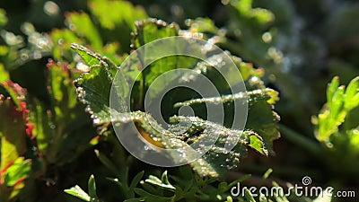 Slut upp timelapse av gräsfältet med frost som smälter in i vatten arkivfilmer