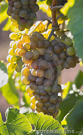Smaczne winogron