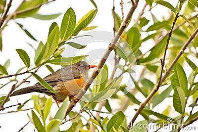 Smal orange beak bird