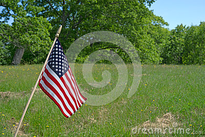 Small American Flag In Meadow