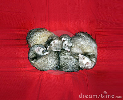 Small Animals on Red