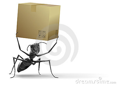 Small ant lifting cardboard box