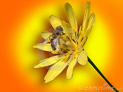 Small bee on yellow flower