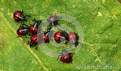 Small beetles