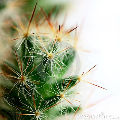Small big cactus