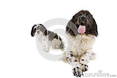 Small and big dog