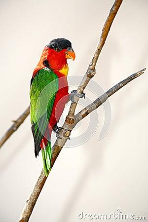 Free Small Bird Royalty Free Stock Image - 1382496