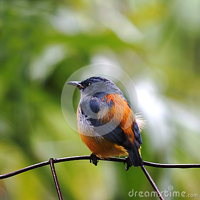 Free Small Bird Royalty Free Stock Photos - 27335658