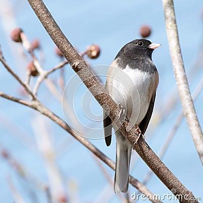 Free Small Bird Stock Photography - 8669442