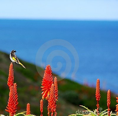 Small bird and cactus flowers
