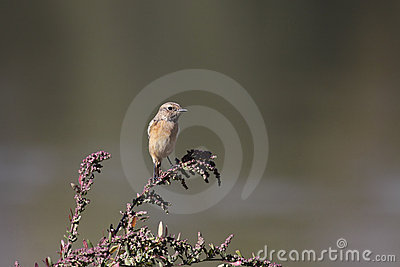 Small bird perched on plant