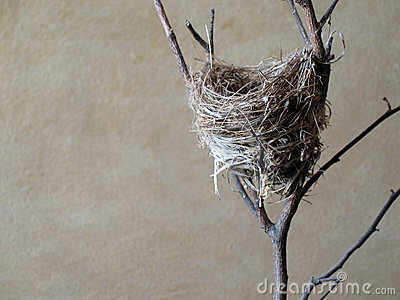 Small bird s nest.