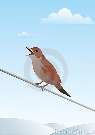 Small bird on a wire