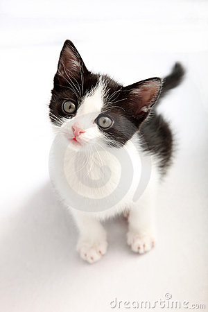Free Small, Black And White Kitten Look Up Royalty Free Stock Photo - 14052575