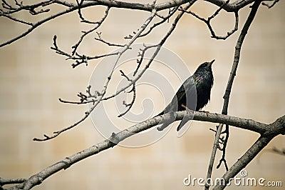 Small black bird on a twig