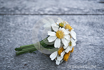 A small bouquet of white daisies on a wooden floor.