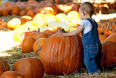 Small Boy Finds Large Pumpkin