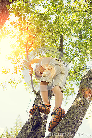 Free Small Boy Has Fun Climbing On The Tree Royalty Free Stock Image - 76533436