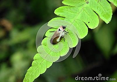 Small bug on a plant leaf