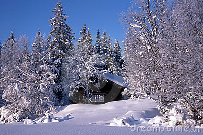 Small cabin Surrounded by snow trees