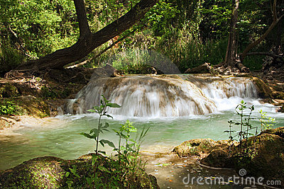 Small cascade in the forest