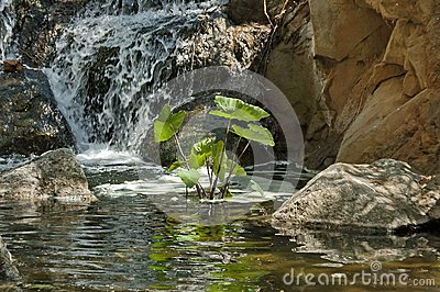 Small cascade waterfall by Palace of the Lost City hotel in Sun City