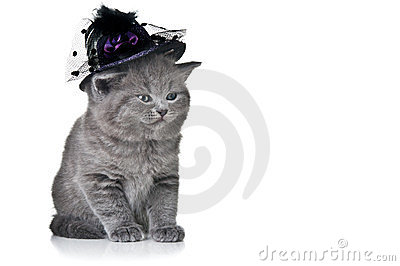 Small cat with hat