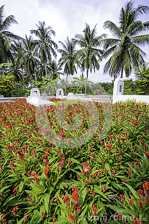 Small cemetery in the mekong delta,vietnam