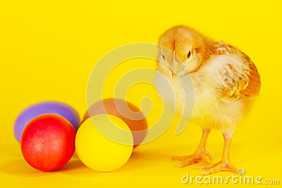 Small chicken staying with colorful Easter eggs