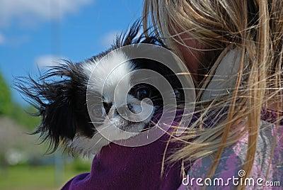 Small cuddly puppy dog