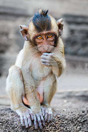 Small cute monkey sitting and looking in the camera