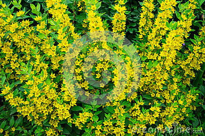 Small And Cute Yellow Flowers Stock Photo Image 44805777