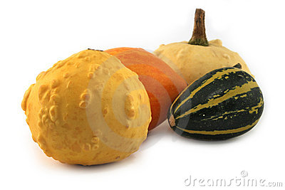 Small decorative pumpkins isolated