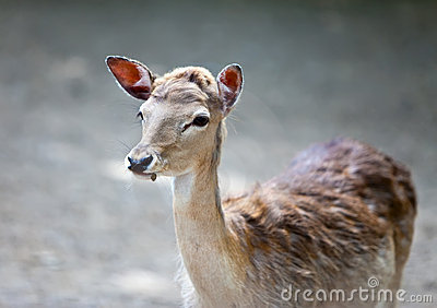 Small Deer Stock Image - Image: 23114141