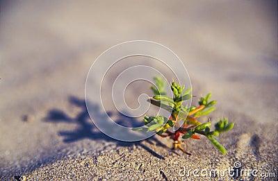 Small desert plant