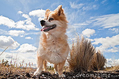 Small dog against cloudy sky
