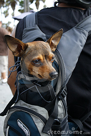 Small Dog In Carrying Bag