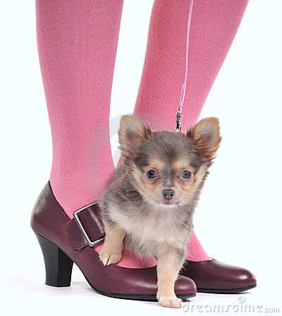 Small Dog on the feet