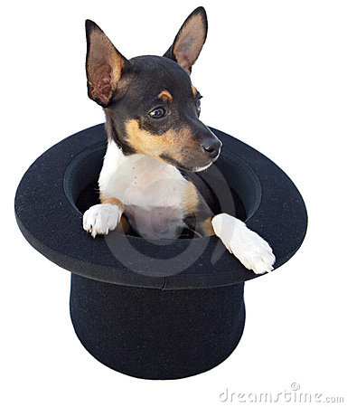 Small dog in a magician hat