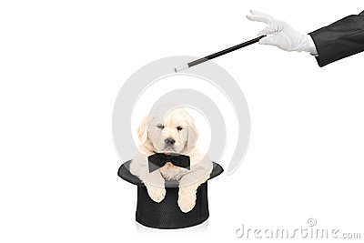 Small dog in top hat and hand with a magic wand