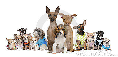 Small dogs in front of white background