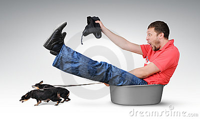 Small dogs pull the man in a basin, humor concept