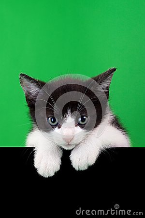 Small Domestic Cat Cutout
