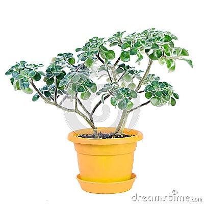 Free Small Feathery Tree Stock Photo - 4176500