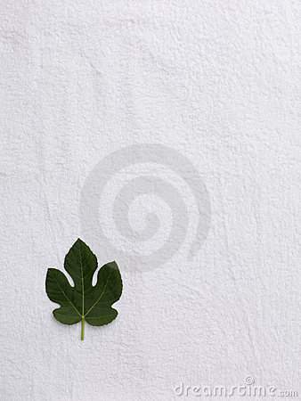 Small fig leaf on a white towel