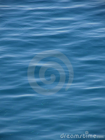 Small fish have a fun in blue sea