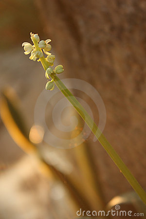 The small flower on the stem