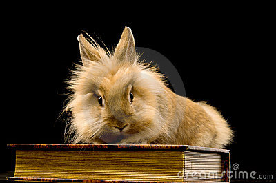 A small fluffy brown rabbit sitting on a book